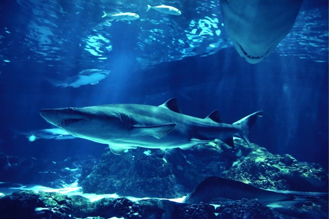 Why Shark Tank (Could Be) Terrible for Your Business